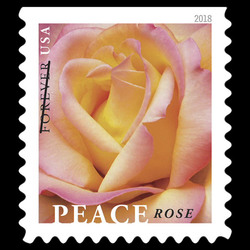 Peace Rose United States Postage Stamp