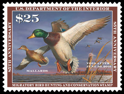 Mallards - Migratory Bird Hunting and Conservation United States Postage Stamp | Federal Duck Stamp