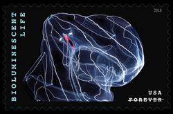 Deep-sea Comb Jelly - Bathocyroe Fosteri United States Postage Stamp | Bioluminescent Life