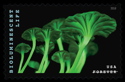 Cluster of Mushrooms - Mycena Lucentipes United States Postage Stamp | Bioluminescent Life