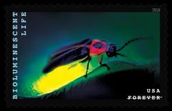 Firefly - Lampyridae United States Postage Stamp | Bioluminescent Life