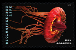 Crown Jellyfish - Atolla Wyvillei United States Postage Stamp | Bioluminescent Life