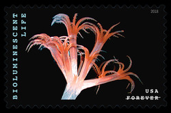 Sea Pen - Umbellula United States Postage Stamp | Bioluminescent Life