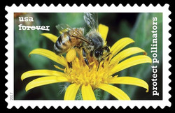 Western Honeybee on a Golden Ragwort United States Postage Stamp | Protect Pollinators