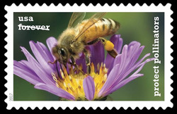 Western Honeybee on a New England Aster United States Postage Stamp | Protect Pollinators