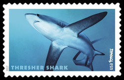 Pelagic Thresher - Alopias Pelagicus United States Postage Stamp | Sharks