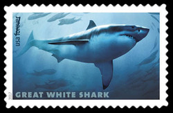 Great White Shark - Carcharodon Carcharias United States Postage Stamp | Sharks
