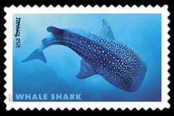 Whale Shark - Rhincodon Typus United States Postage Stamp | Sharks
