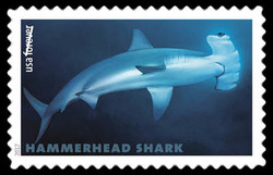 Scalloped Hammerhead - Sphyrna Lewini United States Postage Stamp | Sharks