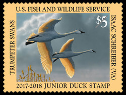 Trumpeter Swans - Junior Duck Stamp United States Postage Stamp | Federal Duck Stamp