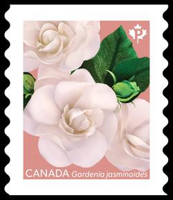 Gardenia Jasminoides - Pink Canada Postage Stamp | Gardenia