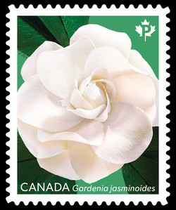 Gardenia Jasminoides - Green Canada Postage Stamp | Gardenia