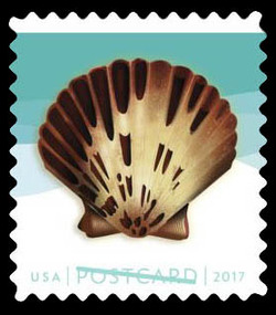 Pacific Calico Scallop United States Postage Stamp | Seashells