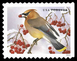 Cedar Waxwing United States Postage Stamp | Songbirds in Snow