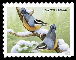 Red-breasted Nuthatch United States Postage Stamp | Songbirds in Snow