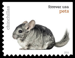 Chinchillas United States Postage Stamp | Pets