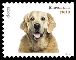 Dogs United States Postage Stamp | Pets