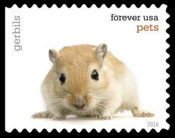 Gerbils United States Postage Stamp | Pets