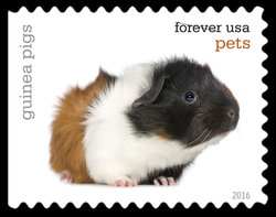 Guinea Pigs United States Postage Stamp | Pets