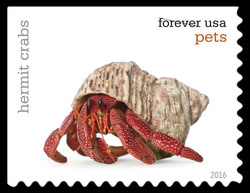 Hermit Crabs United States Postage Stamp | Pets