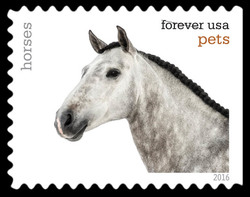 Horses United States Postage Stamp | Pets
