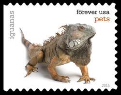 Iguanas United States Postage Stamp | Pets