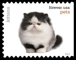 Kittens United States Postage Stamp | Pets