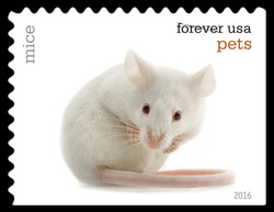 Mice United States Postage Stamp | Pets
