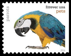 Parrots United States Postage Stamp | Pets