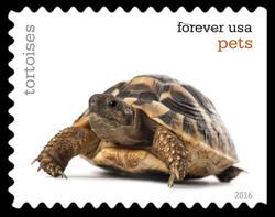 Tortoises United States Postage Stamp | Pets