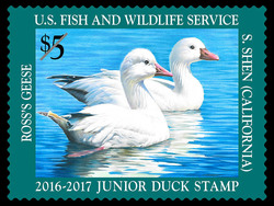 Ross's Geese United States Postage Stamp | Federal Duck Stamp