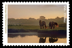 Assateague Island National Seashore - Virginia and Maryland United States Postage Stamp | National Parks