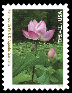 Kenilworth Park and Aquatic Gardens - Washington DC United States Postage Stamp | National Parks