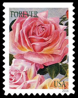 Roses United States Postage Stamp | Botanical Art