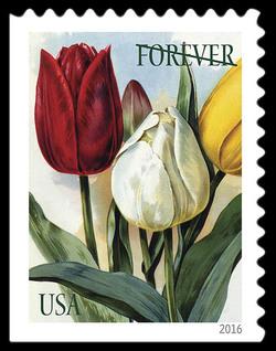 Tulips United States Postage Stamp | Botanical Art