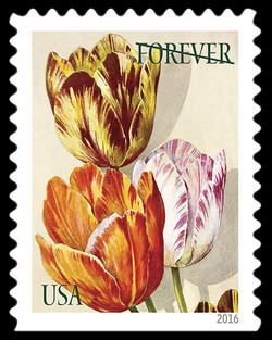 Tulips United States Postage Stamp | Botanical Art