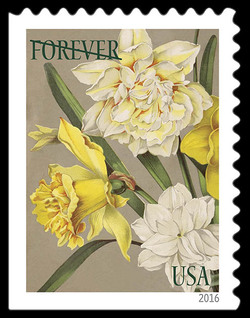 Jonquils and Daffodils United States Postage Stamp | Botanical Art