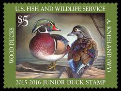 Wood Duck - Junior Duck Stamp United States Postage Stamp | Federal Duck Stamp