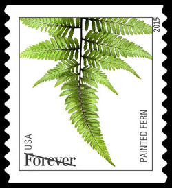 Painted Fern United States Postage Stamp | Ferns
