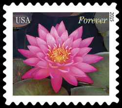 Dark Pink Water Lily United States Postage Stamp | Water Lilies