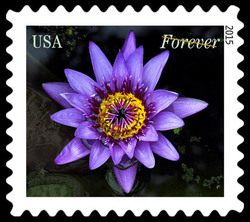 Purple Water Lily United States Postage Stamp | Water Lilies