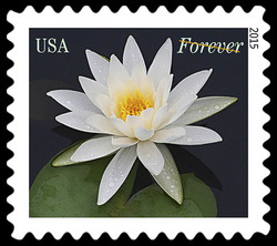 White Water Lily United States Postage Stamp | Water Lilies