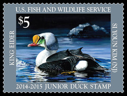 King Eider Junior Duck United States Postage Stamp | Federal Duck Stamp