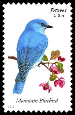 Mountain Bluebird - Sialia Currucoides United States Postage Stamp | Songbirds