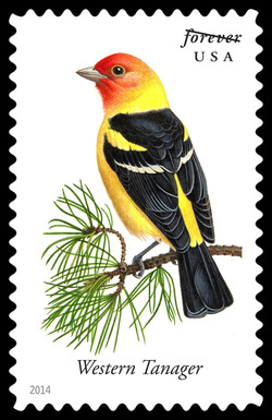Western Tanager - Piranga Ludoviciana United States Postage Stamp | Songbirds