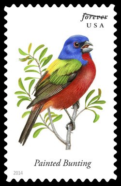 Painted Bunting - Passerina Ciris United States Postage Stamp | Songbirds