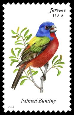 Painted Bunting - Passerina Ciris United States Postage Stamp   Songbirds