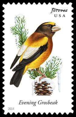 Evening Grosbeak - Coccothraustes Vespertinus United States Postage Stamp | Songbirds