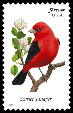Scarlet Tanager - Piranga Olivacea United States Postage Stamp | Songbirds