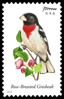 Rose-breasted Grosbeak - Pheucticus Ludovicianus United States Postage Stamp | Songbirds